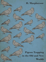 How To Trap Pigeons. Pigeon Trapping Methods