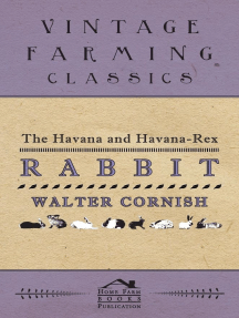 The Havana and Havana-Rex Rabbit