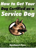 How to Get Your Dog Certified as a Service Dog