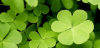 The Role of Luck in Business, Investing and Sports