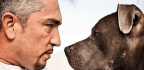 How Dog Whisperer Cesar Millan Learned New Tricks for His Website