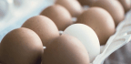 How This Startup Raised a $1.7 Million Seed Round on Chicken-Less Eggs