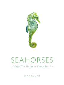 Seahorses: A Life-Size Guide to Every Species