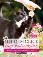 Mit dem Click zum Katzenglück