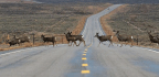 America's Wildlife Corridors Are In Danger
