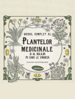Ghidul complet al plantelor medicinale și al bolilor pe care le vindecă