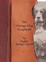 The Vintage Dog Scrapbook - The English Springer Spaniel