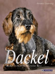 Dackel: Kleiner Hund mit großem Herz
