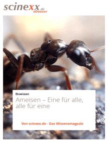 Ameisen: Eine für alle, alle für eine