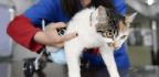 Veterinary Interns Speak Out Against Exploitation