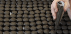 The Threats to the World's Chocolate Forests