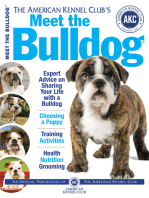 Meet the Bulldog