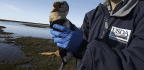 Alaska Is a Perfect Place for Birds to Spread Disease Worldwide