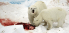 One Weird Trick to Save the World (Using Polar Bears)