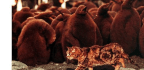 Cats Are Not the Best Defenders of Ecological Health