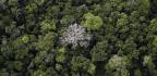 Rainforest Trees Are Like Islands