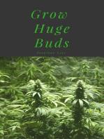 Grow Huge Buds