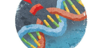 Who Should Be Allowed to Use CRISPR?