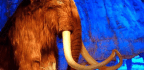 No, the Wooly Mammoth Won't Actually Be Resurrected by 2019