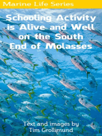 Schooling Activity is Alive and Well on the South End of Molasses