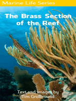 The Brass Section of the Reef