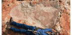 To Save Their Land, They Unveiled the World's Biggest Dinosaur Footprint