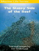 The Glassy Side of the Reef