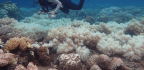 Great Barrier Reef Hit By Bleaching For The Second Year In A Row