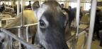 Big Worries In Vermont's Dairy Industry