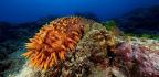 Sea Cucumbers Have a Secret Superpower