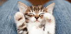 A Trick That Hides Censored Websites Inside Cat Videos