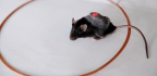 Smartphone-Controlled Cells Release Insulin on Demand in Diabetic Mice