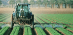 The Facts on Chlorpyrifos