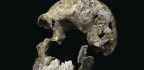 Primitive Human-Like Species Lived More Recently Than Expected