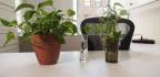 Make a Copy of This Common Office Plant