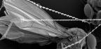 The Spider Web That Gets Stronger When It Touches Insects