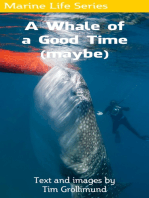 A Whale of a Good Time (Maybe)