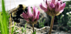 To Keep Bees From Disappearing, Listen to Their Buzz