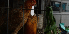 Changes to Bird Flu Virus Could Make Human Transmission More Likely, Scientists Say