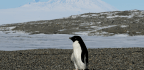 The Latest Threat to Antarctica