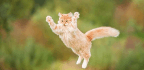 How Cats Used Humans to Conquer the World