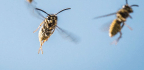 Doctors Ration Allergy Treatments Amid Shortage of Insect Venoms