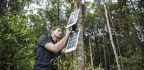 This Engineer Is Using Old Cell Phones to Stop Illegal Logging