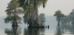 After Centuries Of Draining This Swamp, The Government Now Wants To Save It