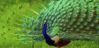 Aesthetic Evolution In The Animal World