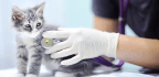 Clinics Aim For Fear-Free Vet Visits For Nervous Pets