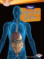 Your Digestive System