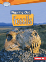 Figuring Out Fossils