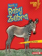 Meet a Baby Zebra