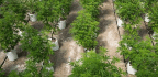 DEA Solicited Applications to Grow Marijuana for Research. It Hasn't Approved One